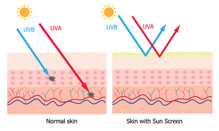 Infographic about sunscreen lotion protect human skin from UVA , UVB ray  sunscreen product