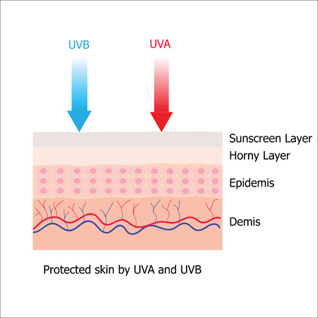 uva: Skin with Sunblock from sunscreen lotion which protect human skin from UVA and UVB