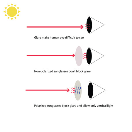 Infographic about how polarized sunglasses prevent our eyess from glare and allow vertical light to enter our eyes