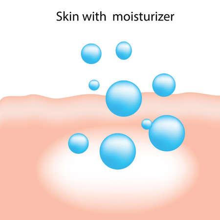 moisturizer: Moisturizer absorb on the human skin infographic vector