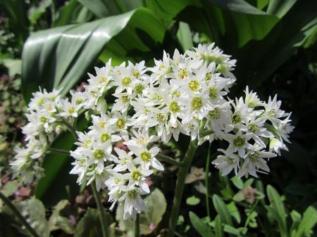 Marba Tancho So Flower