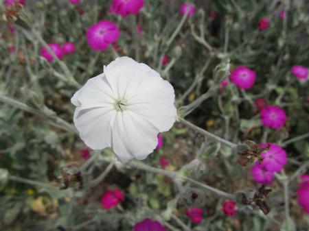 술취한 남자의 흰 꽃