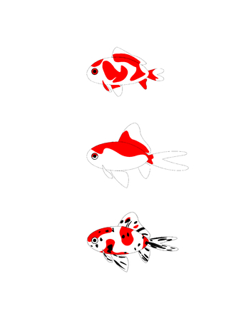 From above, three kinds of goldfish, Goldfish, Comet, Single tailed fancy goldfish