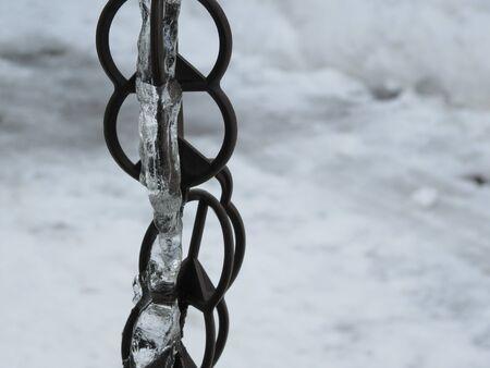 ノミの凍った水