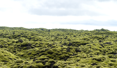 former river of solified lava covered by a layer of green moss in iceland 免版税图像