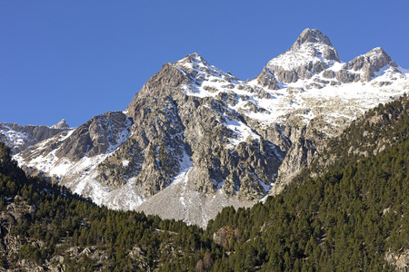 landscape of snowy mountains with a forest of green firs in front during a sunny day