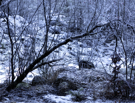deep forest with the ground frozen covered by ice, winter environment background photo 免版税图像