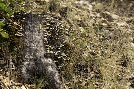 tree trunk with orange mushrooms around it on an autumnal soil full of dry brown leaves 免版税图像