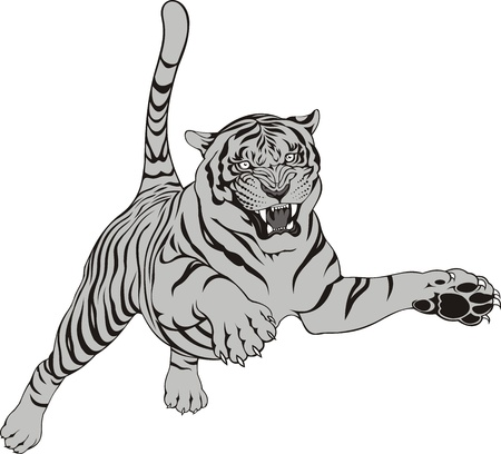 tiger white: grey tiger isolated on the white background Illustration