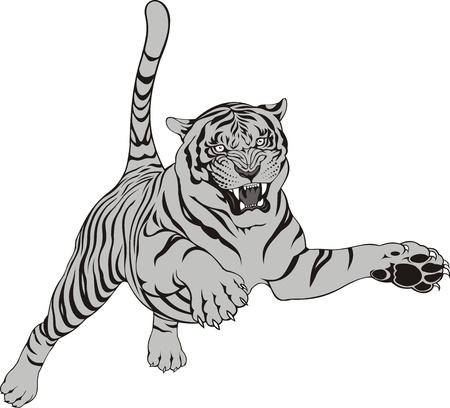 tigre blanc: tigre gris isol� sur le fond blanc