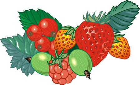 many fresh fruits on the white background Stock Vector - 17958005