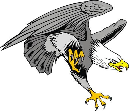 halcones: agradable �guila volando en el fondo blanco