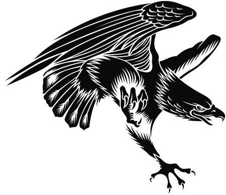 aguila volando: agradable �guila volando en el fondo blanco