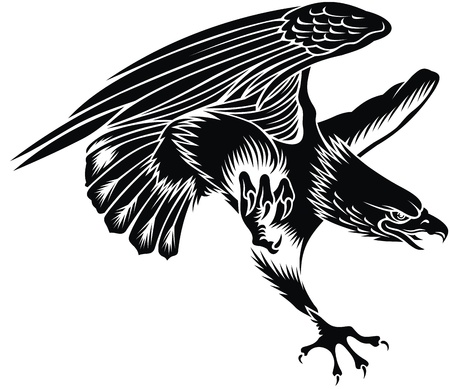 the air attack: nice flying eagle on the white background