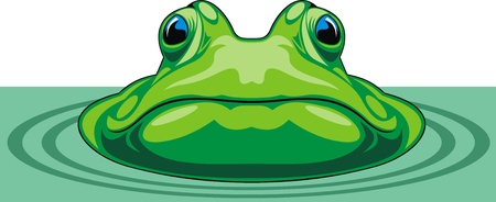tadpole: nice green frog on the white background Illustration
