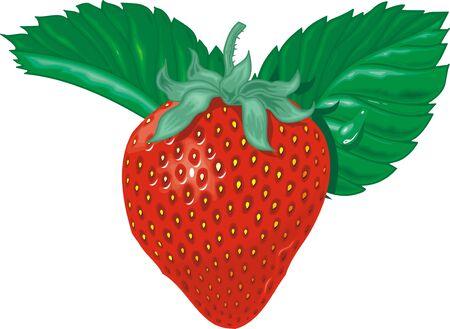 seasoned: sweet strawberry isolated on the white background