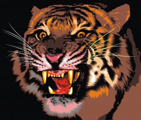검은 배경에 정글의 호랑이