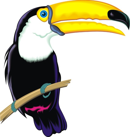 nice toucan on the white background