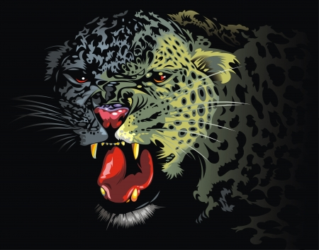 animal teeth: leopard from the jungle on the black background