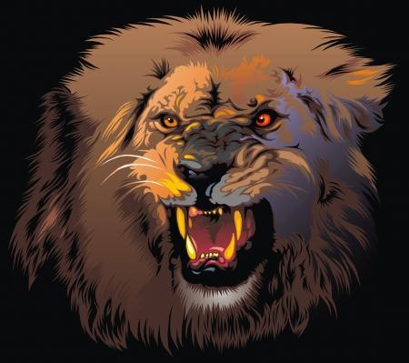 leones: feroz le�n en la selva en el fondo negro Vectores