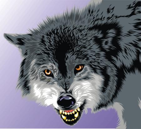cabeza: lobo con los colmillos en el fondo gris Vectores