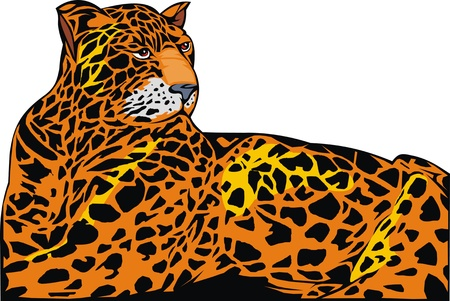 illustrated jaguar from jungle on the white background Vector