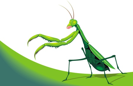 illustrated green mantis on the white background  Vector