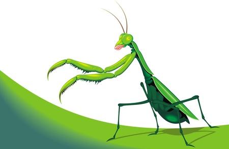 mantis: illustrated green mantis on the white background  Illustration