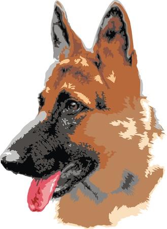 illustrated german shepard dog portrait isolated on white background  Illustration