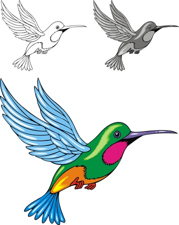 birds of paradise: illustrated color and black and white hummingbird  Illustration
