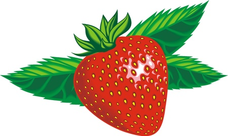 fresh strawberry isolated on the white background Stock Vector - 18997900