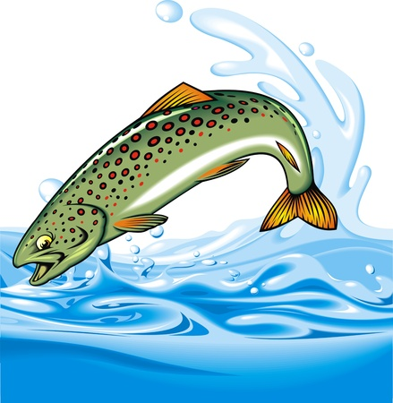 trout fishing: illustrated nice tout fish as interesting background