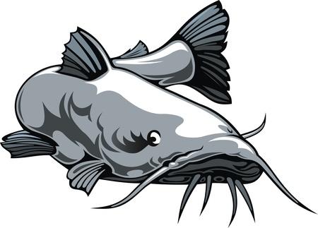 catfish: nice illustrated catfish isolated on white background
