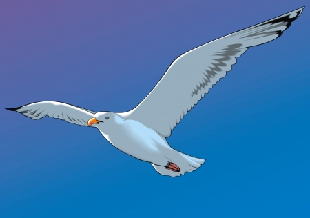nice flying seagull and blue clear sky Illustration