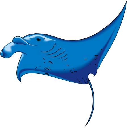 blanket fish: illustrated  sea devil  isolated on white background  Illustration