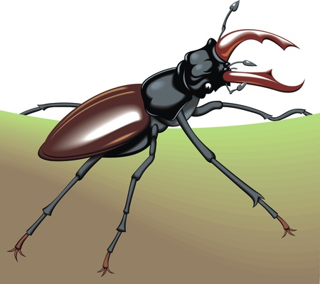 entomologist: nice big bug on the white background
