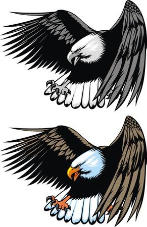 halcones: bonito �guila volando sobre el fondo blanco Vectores