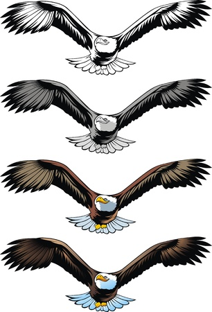 nice flying eagle on the white background  Vector