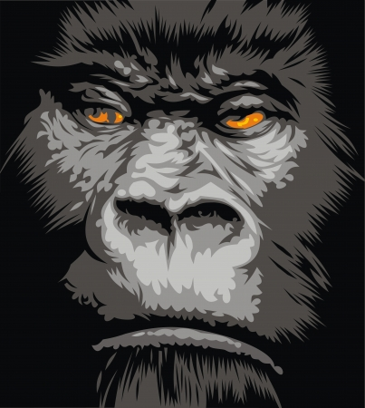 face of gorilla with the orange eyes Vector
