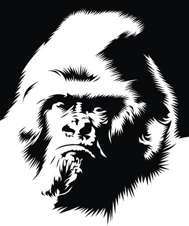 gorilla: Cara del gorila en el blanco y negro Vectores