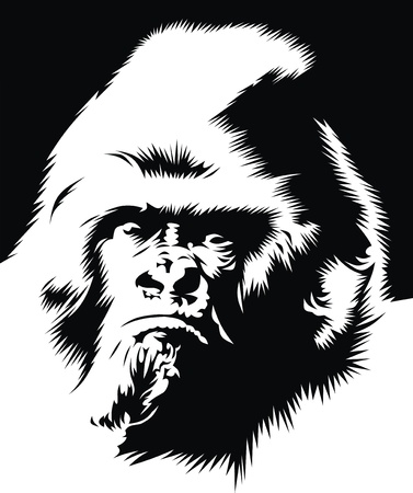 face of gorilla in the black and white