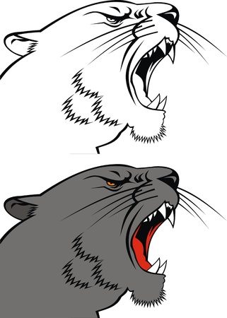 head of puma on the white background  Vector
