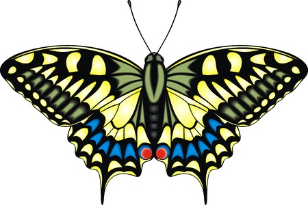 very nice yellow butterfly on the white background