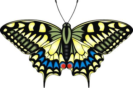 zeer mooie gele vlinder op de witte achtergrond