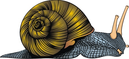 nice color snail on the white background Illustration
