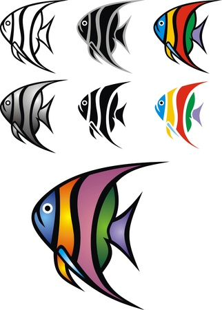 nice illustrated angelfish isolated on white background Vector
