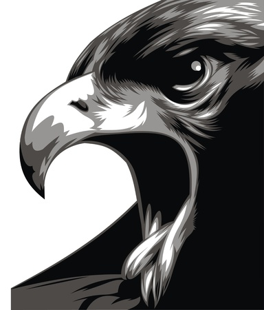 powerfully: head of eagle in black and white isolated on the white background Illustration