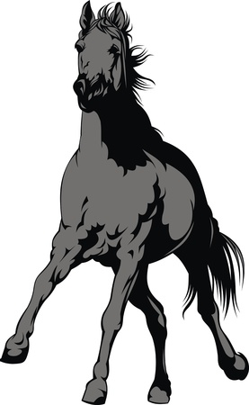 grey horse isolated on the white background Vector