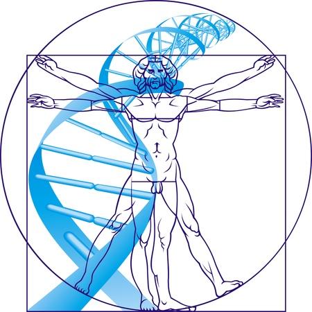 adn humano: Leonardo da Vinci, el hombre y el ADN en el fondo blanco Vectores