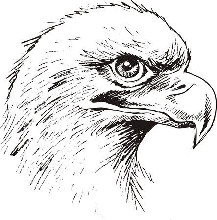 powerfully: detail eagle head on the white background